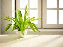 Roślina stoi blisko okno Zdjęcie Royalty Free