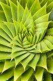 roślina sukulent Obrazy Royalty Free