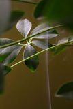 Roślina w dymu Fotografia Stock