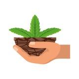 Roślina w garnka wektoru ilustraci Obraz Stock
