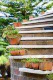 Roślina w garnkach z plenerowym schody fotografia royalty free