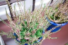 Roślina w garnku na windowsill Zdjęcie Stock