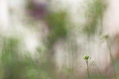 Roślina w ogródzie Zdjęcie Royalty Free