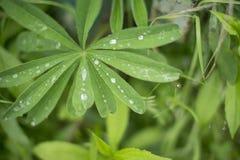 Roślina w ogródzie w deszczowym dniu Obraz Stock