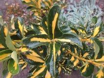Roślina w ogródzie po deszczu obraz stock