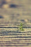 Roślina w piasku Zdjęcia Stock