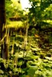 Roślina w schadow Obrazy Royalty Free