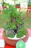 Roślina w terakotowym garnku Zdjęcia Royalty Free