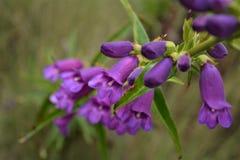 Roślina w volcan Fotografia Royalty Free