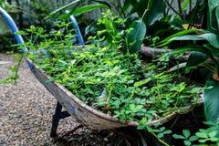 Roślina W wiadrze Zdjęcia Stock