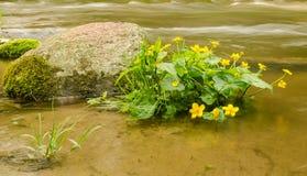 Roślina w wodzie Zdjęcia Stock