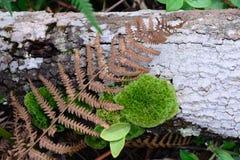 roślina wyczulona Obrazy Royalty Free