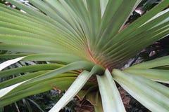 Roślina wzór Zdjęcie Royalty Free