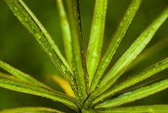 Roślina z wodnymi kropelkami fotografia stock