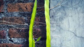 rośliny fotografia royalty free