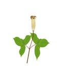 rośliny ilustracja wektor