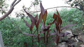 rośliny Obrazy Royalty Free