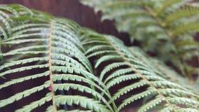 rośliny Obrazy Stock