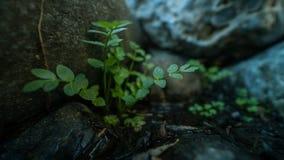 rośliny Zdjęcie Stock