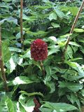rośliny Zdjęcie Royalty Free