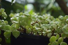 rośliny Zdjęcia Stock
