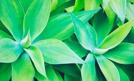 rośliny abstrakcjonistyczna tekstura Obrazy Stock