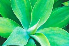 rośliny abstrakcjonistyczna tekstura Fotografia Royalty Free