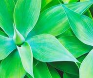 rośliny abstrakcjonistyczna tekstura Zdjęcia Royalty Free
