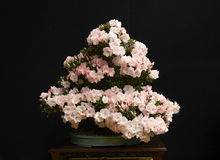 rośliny bonsai Obrazy Royalty Free