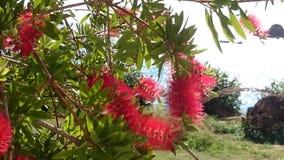 Rośliny Corfu 2 Zdjęcie Royalty Free