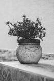 Rośliny dekoracja Fotografia Royalty Free