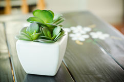 rośliny dekoracyjna Zdjęcia Royalty Free