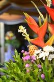 rośliny dekoracyjne Obrazy Royalty Free