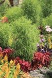 Rośliny dekoracyjny flowerbed w letnim dniu Fotografia Stock