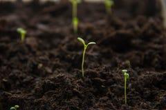 Rośliny flanca od ziemi Fotografia Stock