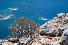 Rośliny Gramvousa wyspa, Grecja Zdjęcia Stock