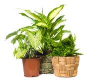 rośliny grupowy okno Obraz Royalty Free