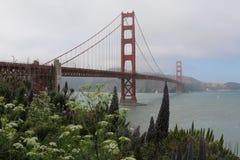 rośliny i drzewa przed Golden Gate Bridge, San Fransisco, Kalifornia, usa Zdjęcie Stock