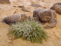 Rośliny i kamienie Fotografia Stock