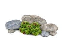 Rośliny i kamienie dla ogrodowej dekoraci Fotografia Stock