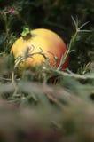 Rośliny i owoc fantazja Zdjęcie Royalty Free