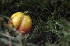 Rośliny i owoc fantazja Obraz Royalty Free