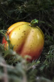 Rośliny i owoc fantazja Obrazy Stock