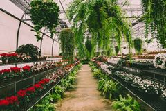 Rośliny inside pepiniera Fotografia Royalty Free