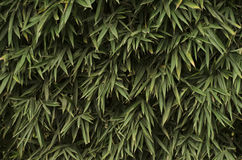 Rośliny kaskada Zdjęcia Royalty Free