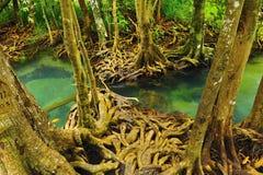 rośliny korzenia woda obrazy royalty free