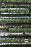 Rośliny krzewienie w szklanej butelce Zdjęcia Stock