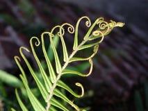 rośliny krzywej Obrazy Stock