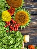 Rośliny, kwiaty i jagody na drewnianym tle, zdjęcia stock