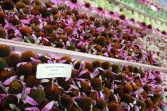 rośliny lecznicze Zdjęcia Stock